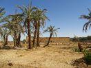 5687 - Hibis tempel - Kharga
