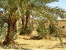 5690 - Hibis tempel - Kharga