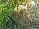 5772 - Muur van palmtakken bij Nadura tempel en fort - Kharga