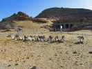 6940 - Z-N-zicht tempel van Ramses II uit Derr - New Amada